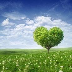 The Healing Heart | Shadow Dancing - Derek Rydall